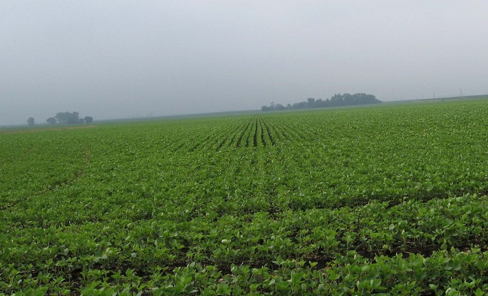 Lots of soy bean plants to the south.