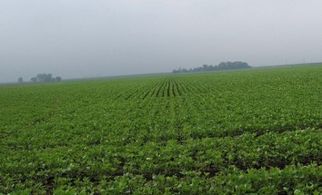 #1: Lots of soy bean plants to the south.