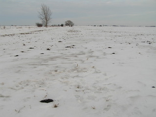 #1: Site of 42 North 89 West in the foreground, with my footprints, looking east-northeast.
