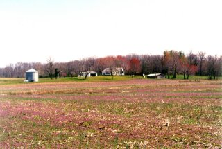 #1: Looking southeast toward the Masterson farm buildings