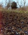 #5: Furrows