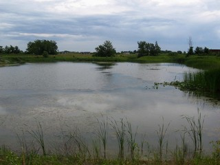 #1: The confluence is 70 meters south across this pond/lake.