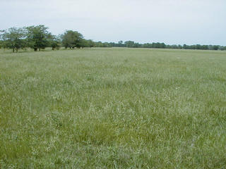 #1: Grazing field, facing north, 37N 95W about 60 meters in the center of the picture.