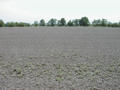 #5: Facing south, the plowed field.