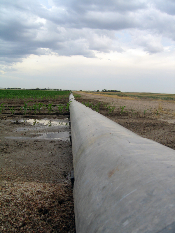 Irrigation pipe for the corn.