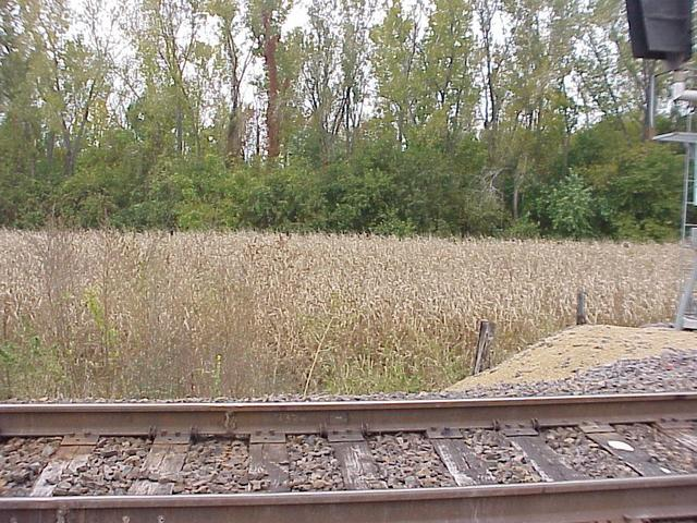 View from the railroad tracks, looking south over the cornfield to the woodland where the confluence is located.