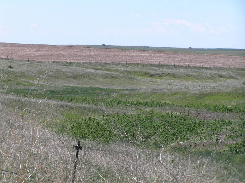 View to the east from the confluence, Nebraska on the left, Kansas on the right.