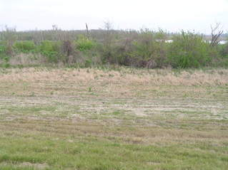 #1: The confluence of 30 North 90 West, down the slope from the levee, about 6 meters shy of the marsh, looking north.
