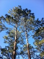 #6: Trees above the campsite