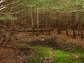 #4: A small clearing with standing water at the confluence in the view to the south.