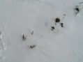 #4: Corn stalks and snow:  Ground cover at the confluence.