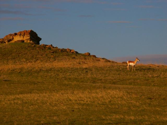 Antelope near the confluence