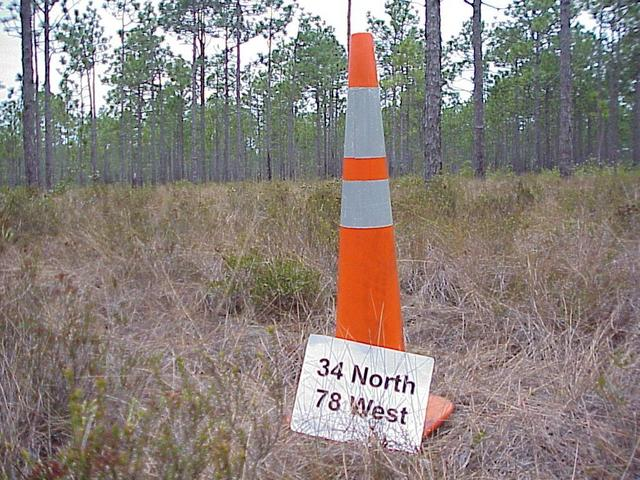 Cone we planted at the confluence site.