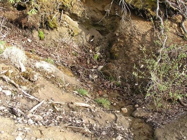The nearby picturesque mountain spring photographed in 2001 is now a PVC pipe at the edge of a road cut.