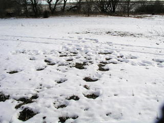 #1: Leftover footprints from the previous visit mark 41N 96W.