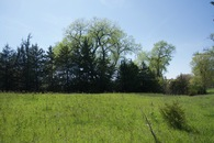 #5: View West (towards a small creek, lined with trees)
