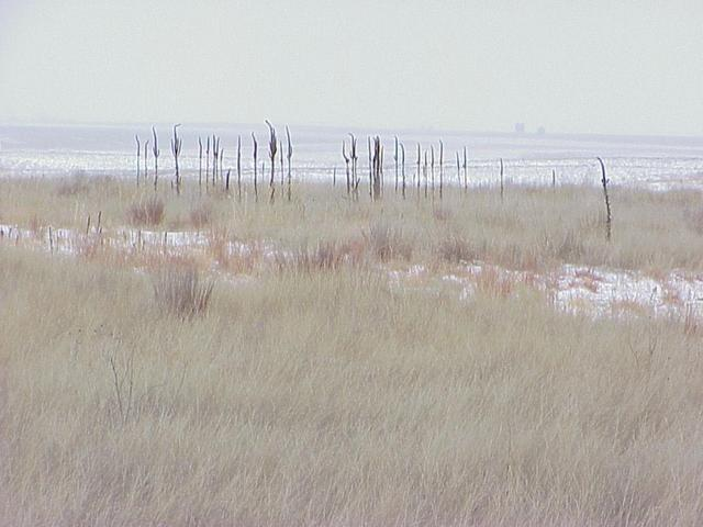 Confluence site, looking southeast, on the Great Plains of Nebraska.