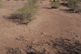 #1: The confluence point lies in a thinly vegetated desert area