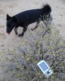 #5: Dog, and GPS