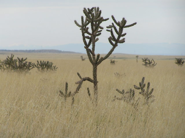 View to the north showing cholla cactus from 35 North 105 West in New Mexico.