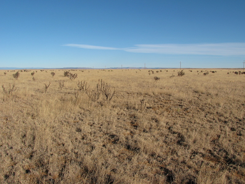 North - cows can be seen in the distance on the left