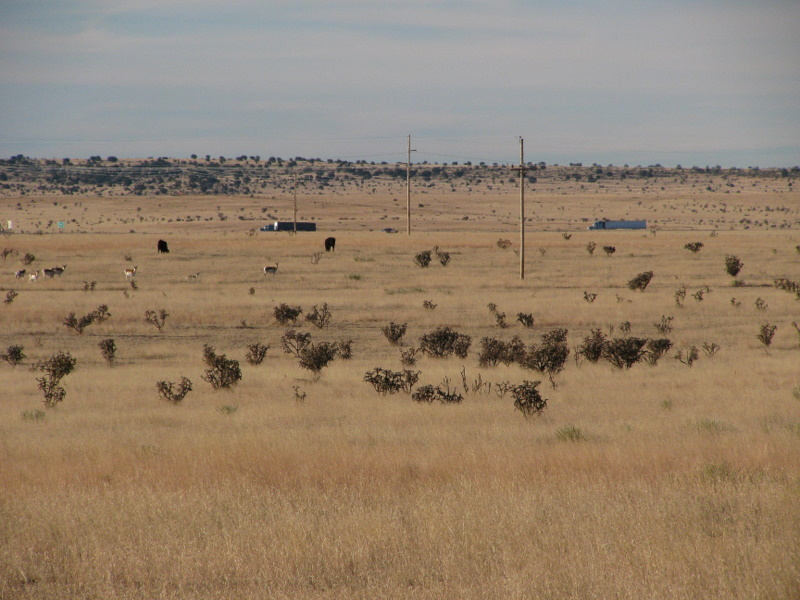 Zoomed in looking South showing trucks on I40, cows and Antelope in field