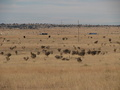 #6: Zoomed in looking South showing trucks on I40, cows and Antelope in field