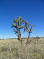 #6: Nearby Cactus