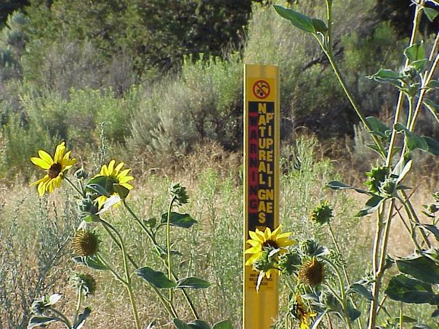 Sign of the area:  Gas Pipeline, about 400 meters southeast of the confluence.
