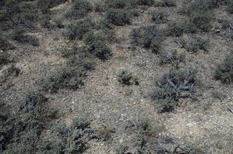 #1: Yet again, desert sagebrush!