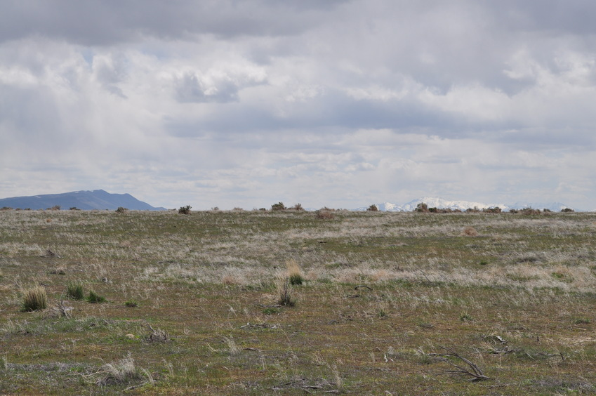 View South (towards the Shoshone Range)