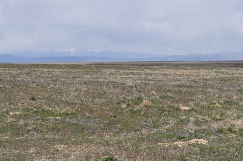 View West (towards the Osgood Mountains and Santa Rosa Range)