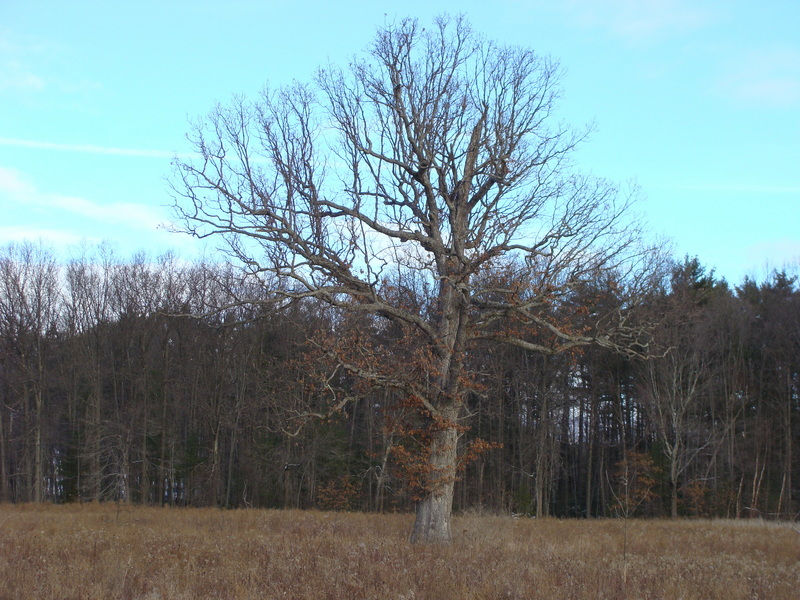 A lone tree dominates the scene north of 42N 74W