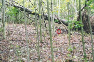 #1: The red circle shows the confluence in front of a fallen tree.
