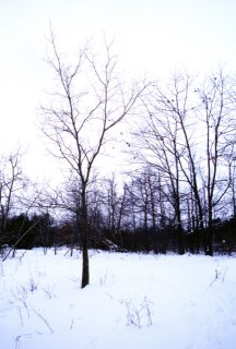 #1: Tree in a snowy clearing