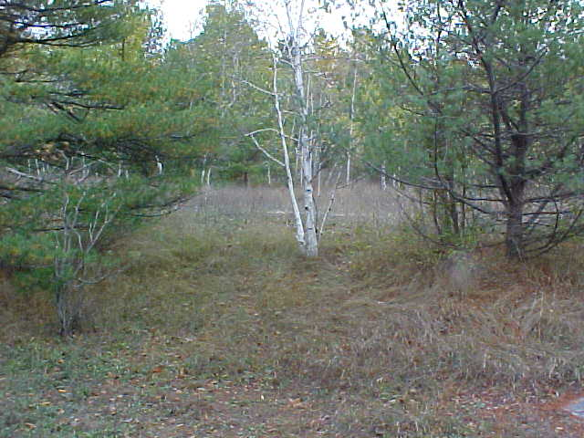 Confluence Area View #3 - the lonely little birch tree watches me!
