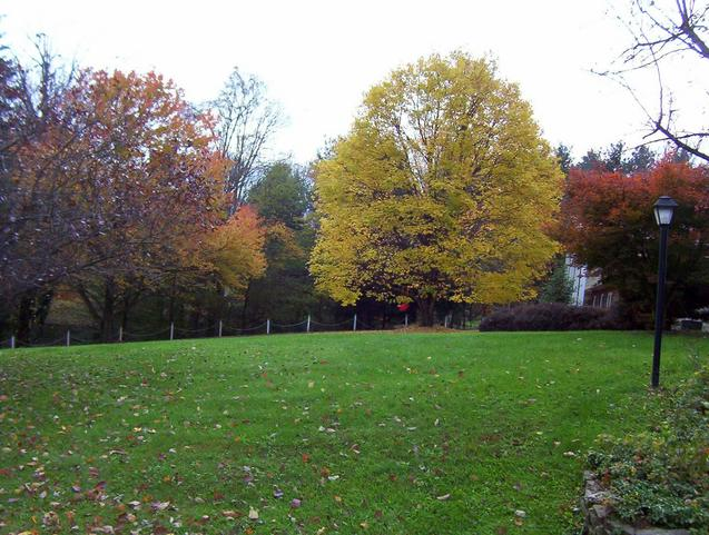 Looking south across the front lawn of 201 Skyline Dr.