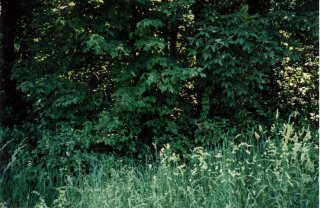 #1: Dense woods covers confluence