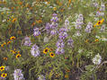 #4: Wildflowers along US 70 near Millerton, OK