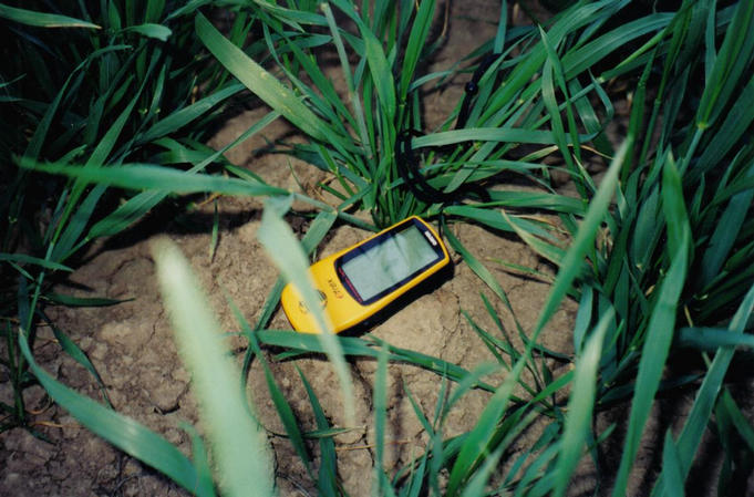 Still life with green wheat and GPS