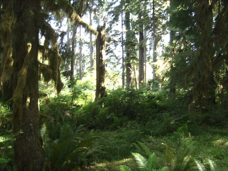 Nationalpark Olympic Mountains.JPG -- Olympic National Park
