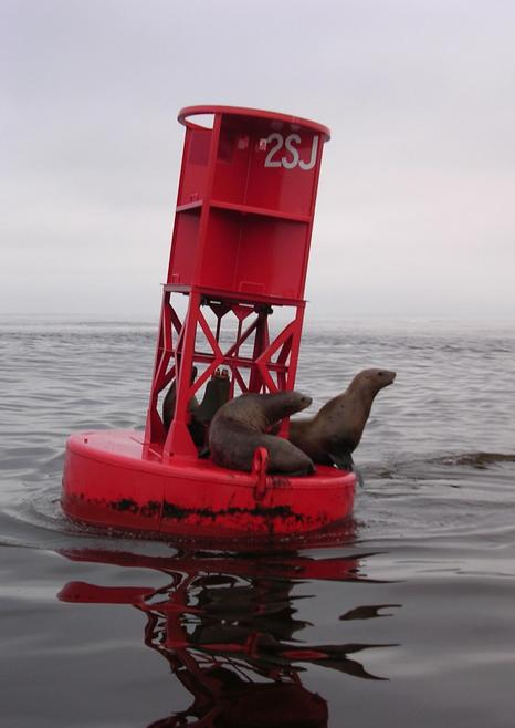 Seals resting on Columbia River buoy 2SJ