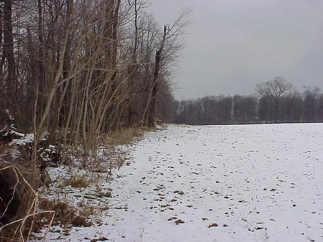 Site of 40 North 76 West, looking northeast along the treeline.