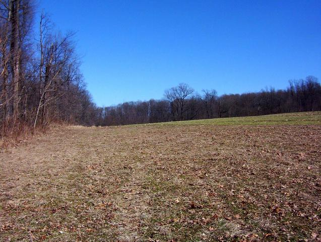View to the east along the wooded area.