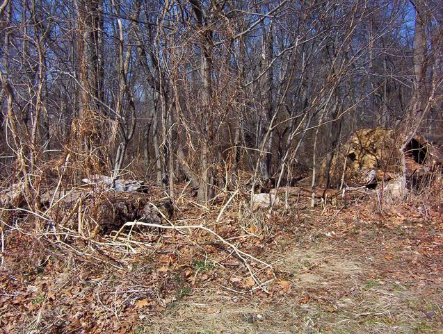 Looking north into the woods; note the uprooted tree.