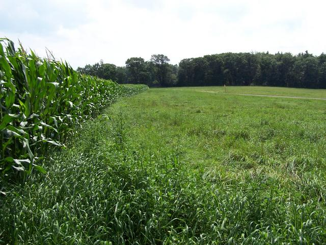 View South from the edge of the corn field.