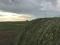 #9: Hay bales en route to the confluence point.