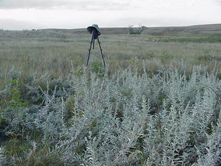 #1: The site looking south with the sagebrush.