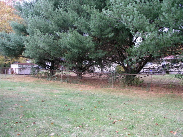Viewed from ten feet away, a chain link fence and a row of evergreens to the north form a backdrop for 36N 084W.