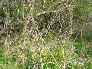 #1: Looking northeast to the confluence through orange flowers (lantana)